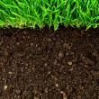 Stock Photo: Healthy grass and soil