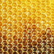 Unfinished honey in honeycombs - Stock Photo