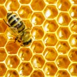 Close up view of the working bees on honey cells - Lizenzfreies Foto