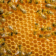 Close up view of the working bees on honey cells — Stock Photo #21814295