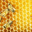 Close up view of the working bees on honey cells — Stock Photo #21814447