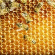Close up view of the working bees on honey cells — Photo