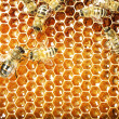 Close up view of the working bees on honey cells — Stok fotoğraf