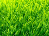 Healthy grass and soil — 图库照片