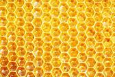 Obehandlad honung i vaxkakor — Stockfoto