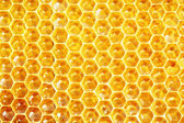Unfinished honey in honeycombs — Fotografia Stock