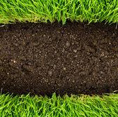 υγιή χλόη και το χώμα — Φωτογραφία Αρχείου