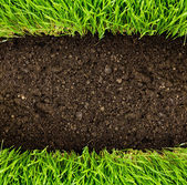 Healthy grass and soil — Stockfoto