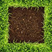Friskt gräs och jord — Stockfoto