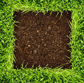 Healthy grass and soil — Foto de Stock