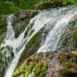 Fresh water stream with waterfall in mountain forest — Video