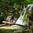Fresh water stream with waterfall in mountain forest — Stockvideo