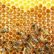 Stock Video: Bees work on honeycomb