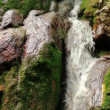 Fresh water stream with waterfall in mountain forest — Vídeo Stock