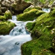 Forest waterfall and rocks covered with moss — Stock Photo