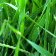 Green grass with dew — Stock Photo #1345070