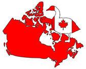 Canada goose  — Stock Vector