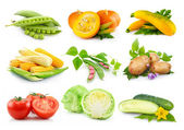 Set of autumnal vegetables isolated on white — Stock Photo