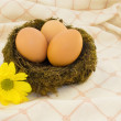 Eggs in the nest — Stock Photo #2302446