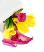 Bunch of yellow and pink cala lilies — Stock Photo