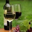One glass of white wine and red wine and grapes — Stock Photo