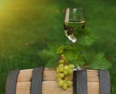 One glass of white wine on the wine barrel — Stock Photo