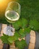 One glass of white wine and green leaves — Stock Photo