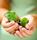 Kind houden plantje — Stockfoto