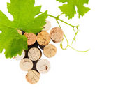 Dated wine bottle corks isolated on the white — Stock Photo