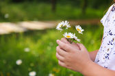 Daisies in hands of a child. Sunny spring background. Close up. — Stock Photo