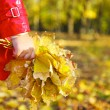 Stock Photo: Little girl holding autumn leaves in beauty park