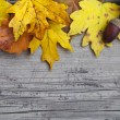 Autumn background with maple and oak leaves and acorns — Stock Photo #31855461