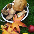 Autumn maple leaves, mushrooms and apples — Stock Photo