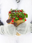Woman holding winter plant in her hands — Stock Photo
