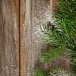 Christmas fir tree covered with snow — Stockfoto