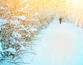 Snow footpath, trees in snow — Stock fotografie