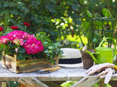 Beautiful spring flowers and and gargen tools on the table outdo — Stock Photo
