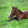 Newborn baby horse on the green grass — Stock Photo #44162049