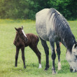 Newborn baby horse with mother on the green grass — Stock Photo #45145371