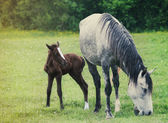 Newborn baby horse with mother on the green grass — Stock Photo