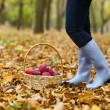 Autumn country - woman with wicker basket harvesting apple — Stock Photo #51400995
