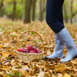 Autumn country - woman with wicker basket harvesting apple — Stock Photo