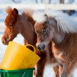 Ponies eating in winter - Stock Photo