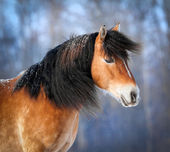 Horse portrait in winter — Stock Photo