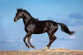 Cavallo nero in esecuzione su un cielo blu — Foto Stock