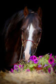 Horse head with hay and flowers isolated. — Stock Photo
