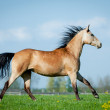 Horse galloping in pasture — Stock Photo