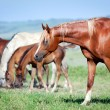 Herd of horses on the field — Stock Photo