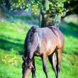 Brown horse in field — Stock Photo