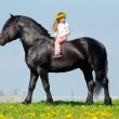 Child and big black horse — Stock Photo #30781519